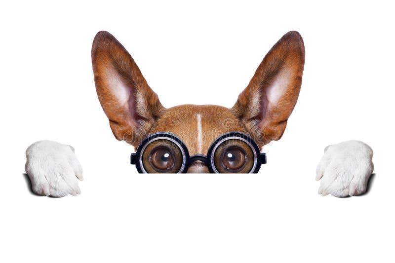 Niemy szalony pies obraz stock