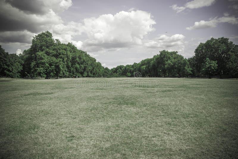 Niemy zieleni pole trawy i drzew tło fotografia stock