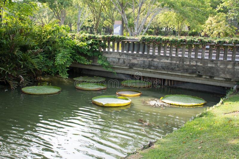 Download Nient'altro fotografia stock. Immagine di giardino, fiume - 56883422