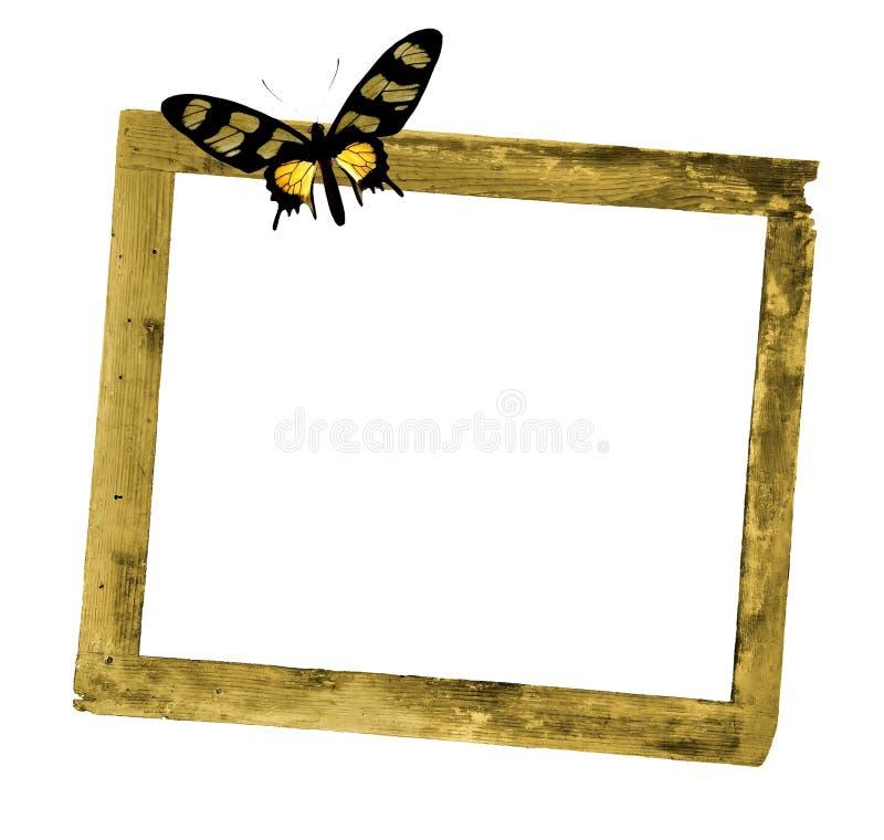 Nieociosana drewniana rama z kolorowym motylem zdjęcie royalty free