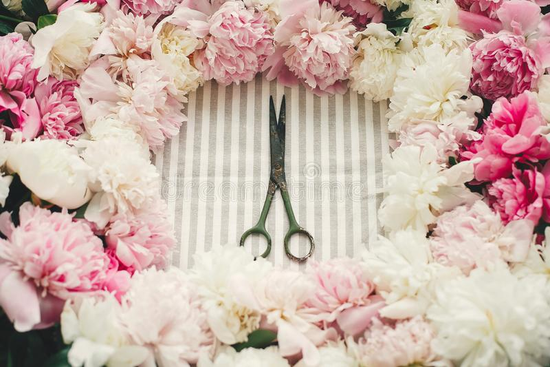 Nieociosani starzy nożyce w różowej i białej peoni ramie na stole, mieszkanie nieatutowy Kwiaciarnia i kwiecisty sklepowy pojęcie obrazy royalty free