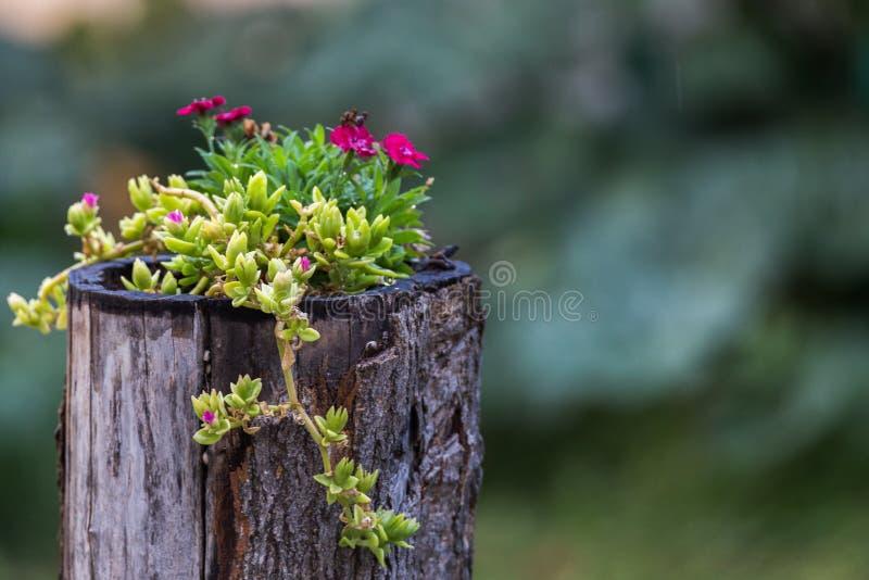 Nieociosany garnek kwiaty obraz royalty free