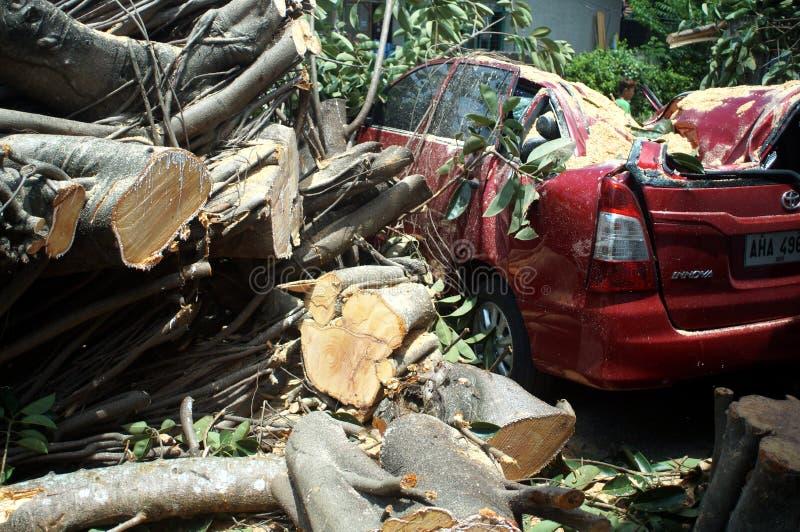 Nieoczekiwanie spadał na parkującym czerwonym samochodzie na słonecznym dniu i spokoju duży gumowy drzewo zdjęcia stock