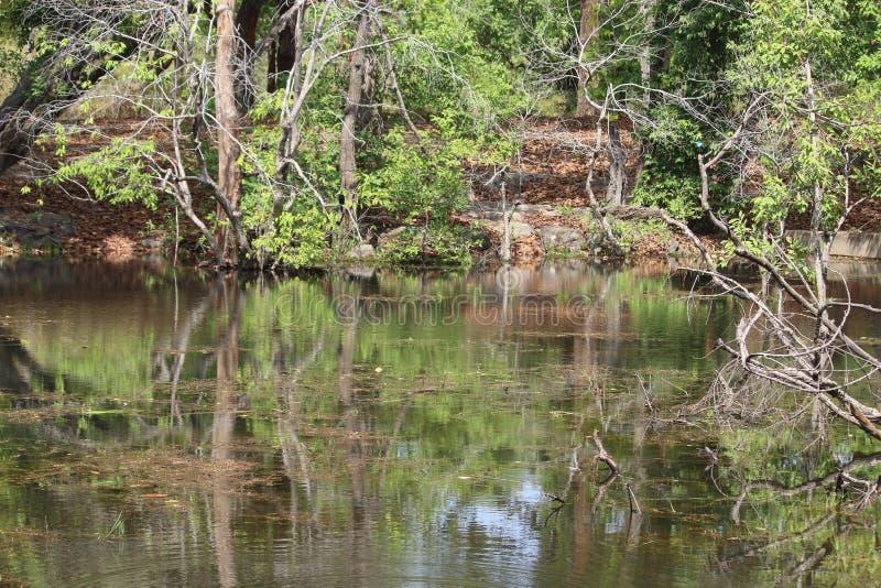 Nieporuszony lasowy bagna, krajobrazowy «Bandhavgrah park narodowy «, ind fotografia royalty free