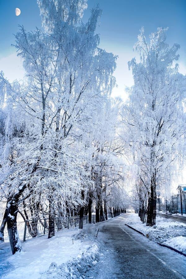 Nieprawdopodobny widok śnieżni drzewa w zima mroźnym dniu zdjęcie royalty free