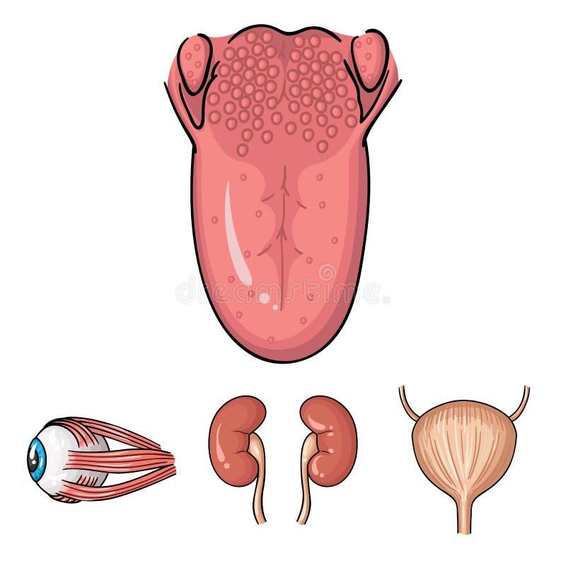 Ziemlich Anatomie Niere Blase Zeitgenössisch - Menschliche Anatomie ...