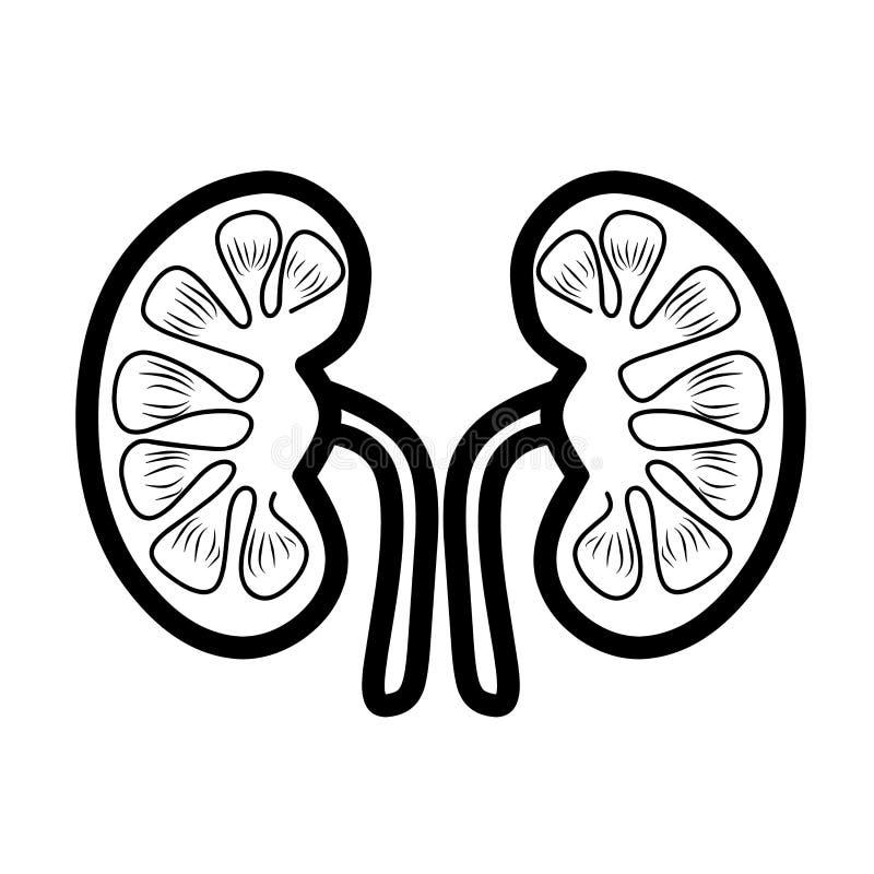 Nierenikone Nierensorgfalt Menschliches Organ-Nieren-Ikone lizenzfreie abbildung