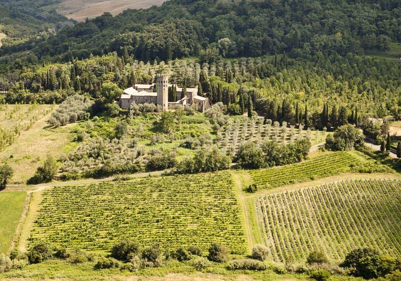 nieruchomości Umbria winnicy obraz stock