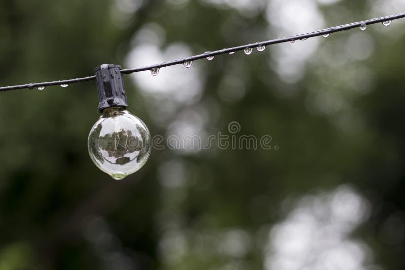 Niesamowicie bistro żarówka opuszczać w deszczu obraz royalty free