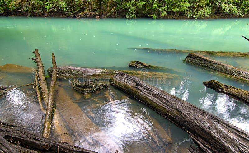 Niesamowicie cristal zielona rzeka z spadać drzewami obraz royalty free