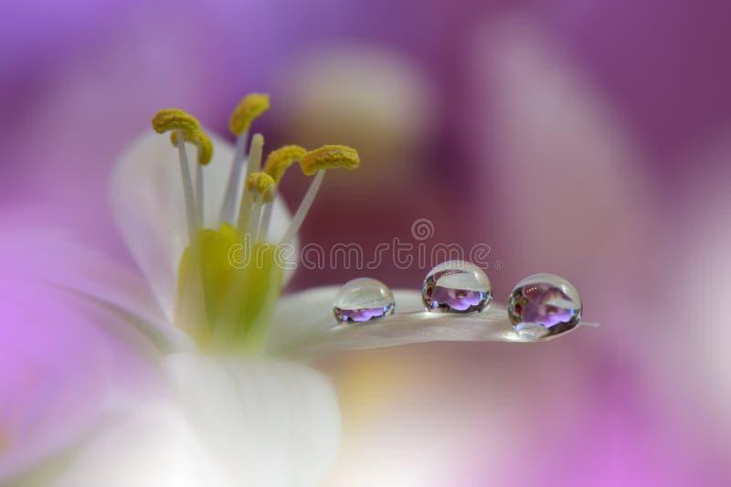 Niesamowicie piękna natura Sztuki fotografia Fantazja projekt kreatywne tło Zadziwiający kolorowi kwiaty Sieć sztandar relaksuje fotografia stock