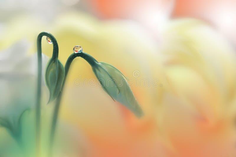 Niesamowicie piękna natura Sztuki fotografia Fantazja projekt kreatywne tło Zadziwiający kolorowi kwiaty Sieć sztandar relaksuje obraz royalty free