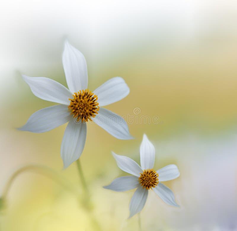Niesamowicie piękna natura Sztuki Współczesnej fotografia Fantazja projekt kreatywne tło Zadziwiający Kolorowi Biali kwiaty Ogród obrazy royalty free