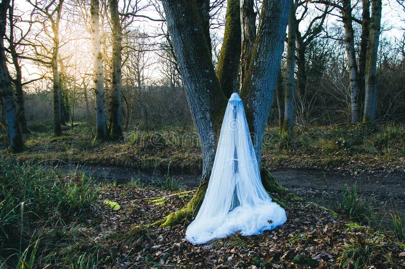 Niesamowity barani czaszki obwieszenie od drzewa zakrywającego w siatkarstwie, ina las w zimie Z niemy strasznym redaguje zdjęcia stock