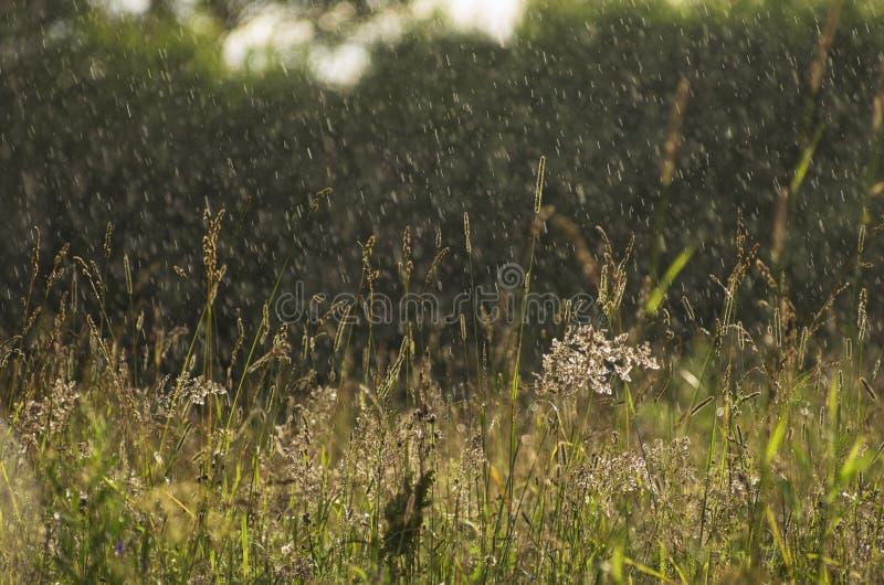 Nieselnder Regen über einer Sommerwiese lizenzfreie stockbilder