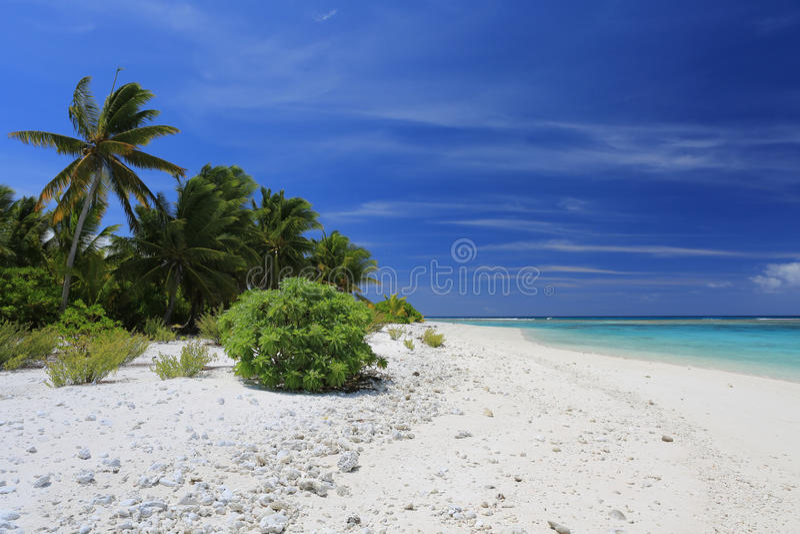 Nieskazitelna daleka coco palmy plaża, Bożenarodzeniowa wyspa, Kiribati fotografia stock