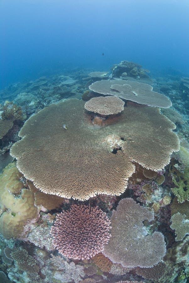 Nieskazitelna Rafa koralowa zdjęcie royalty free