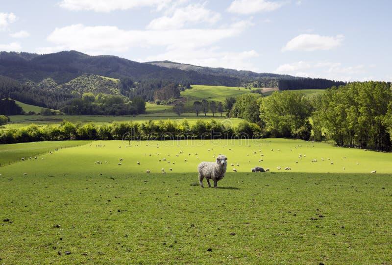Nieskazitelny gospodarstwo rolne dla żywieniowych cakli zdjęcia stock