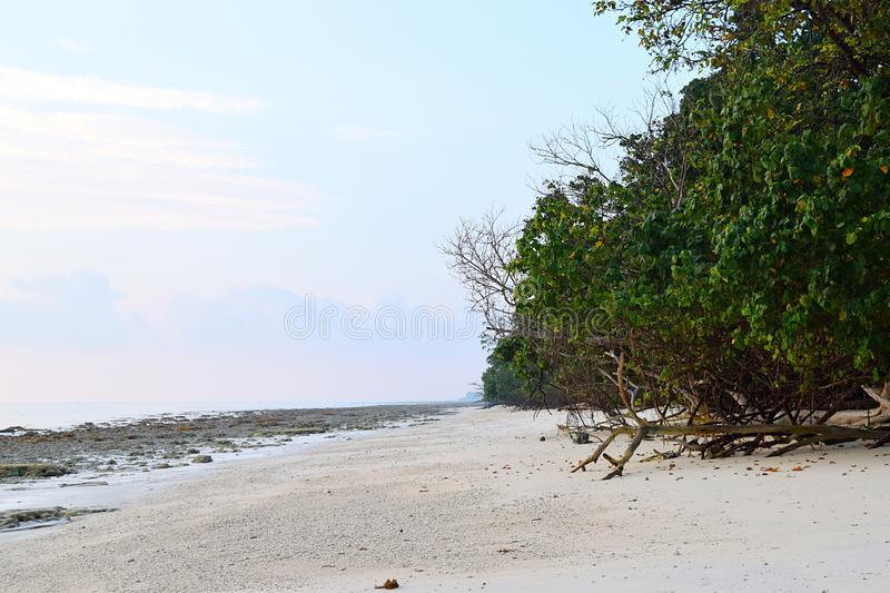 Nieskazitelny i Spokojny Biały Sandy i Skalista plaża z Nabrzeżną plantacją Naturalny tło - Kalapathar, Havelock, Andaman - fotografia royalty free