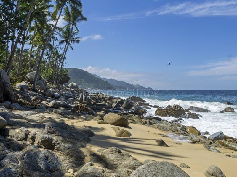 Nieskazitelny oceanu spokojnego wybrzeże obraz royalty free