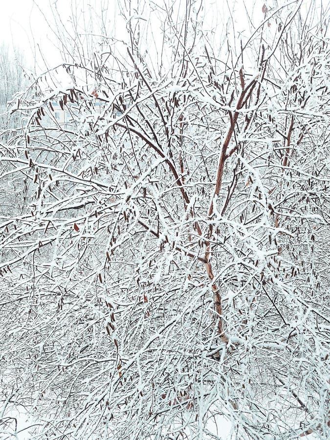 Niespodziewany początek zima na pierwszy dniu Grudzień fotografia royalty free