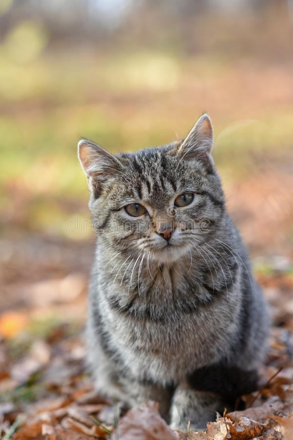 Nieszczęśliwi koty żyją na ulicach, szuka jedzenie obraz royalty free