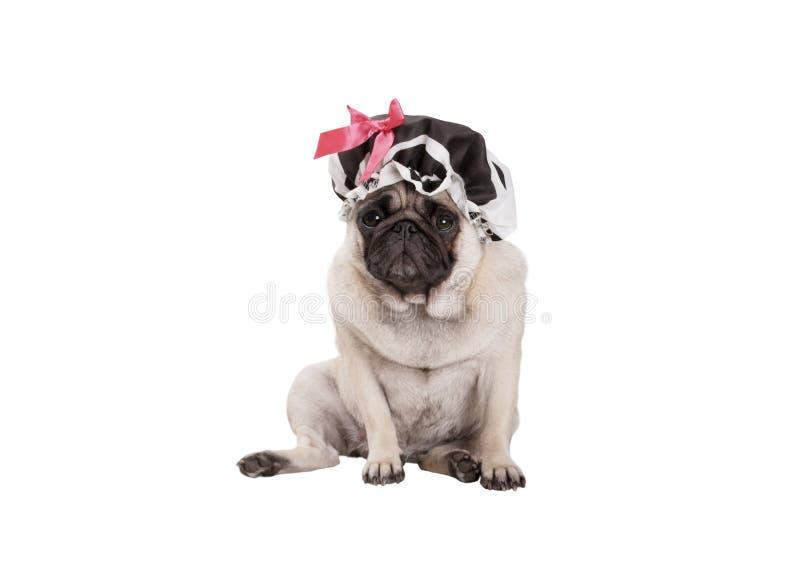 Nieszczęśliwy mopsa szczeniaka pies z prysznic nakrętką, siedzący puszek, przygotowywa dla brać skąpanie obraz stock