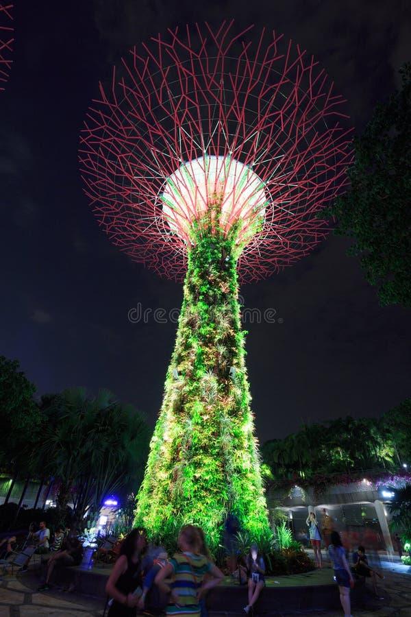 Niet geïdentificeerd toerist bezocht licht van tuinen door de baai bij nigh royalty-vrije stock fotografie