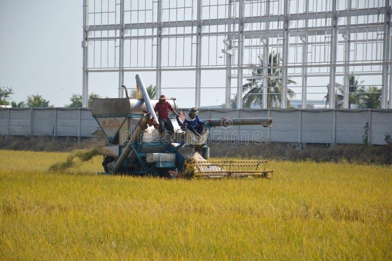 Niet-geïdentificeerde landbouwer die rijst oogst op padie met oogstauto in Chachoengsao, Thailand stock fotografie