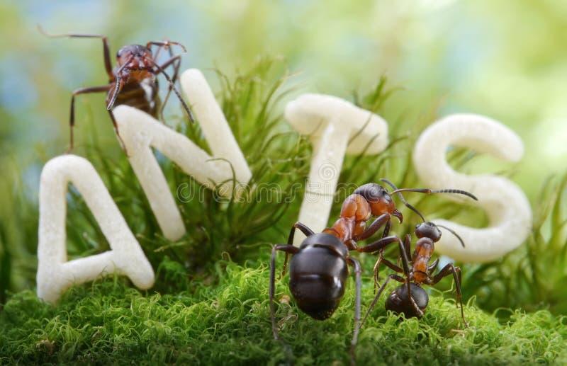Niet worm, maar brief S! bos school, mierenverhalen stock afbeelding