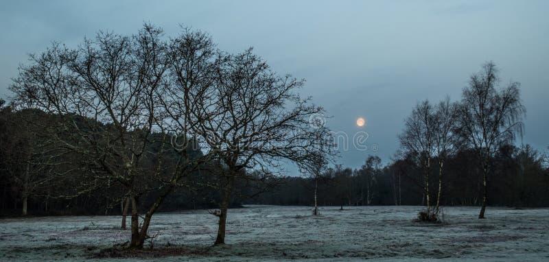 Nieuw Forest Moon Rise stock afbeeldingen
