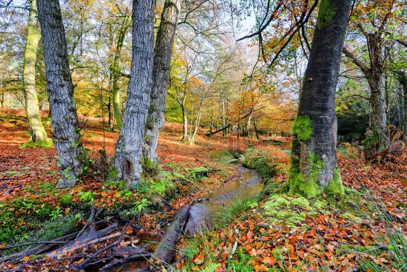 Nieuw Forest Stream in de Herfst stock afbeelding