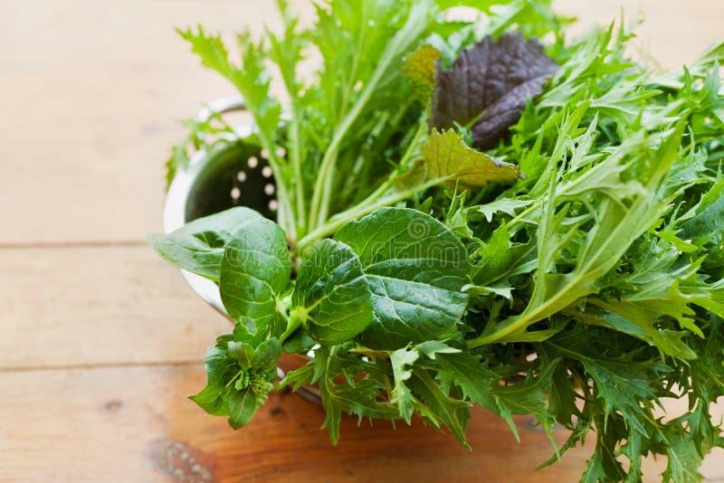Nieuw gewas van de verse organische bladeren van de mengelingssalade met mizuna, sla, pakchoi, tatsoi, boerenkool, spinazie en bl royalty-vrije stock afbeeldingen