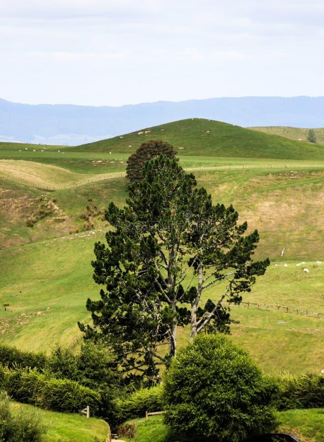 Nieuw Zeeland in de zomer stock fotografie