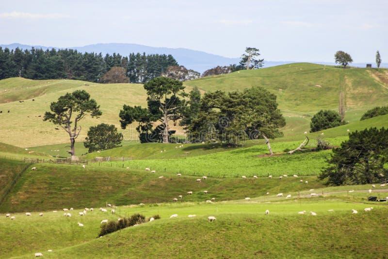 Nieuw Zeeland in de zomer royalty-vrije stock afbeelding
