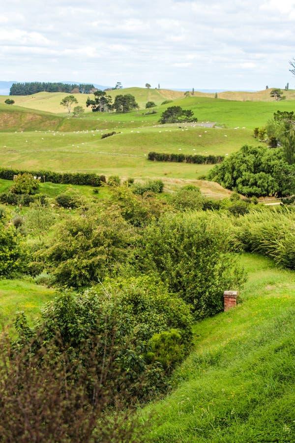 Nieuw Zeeland in de zomer stock foto