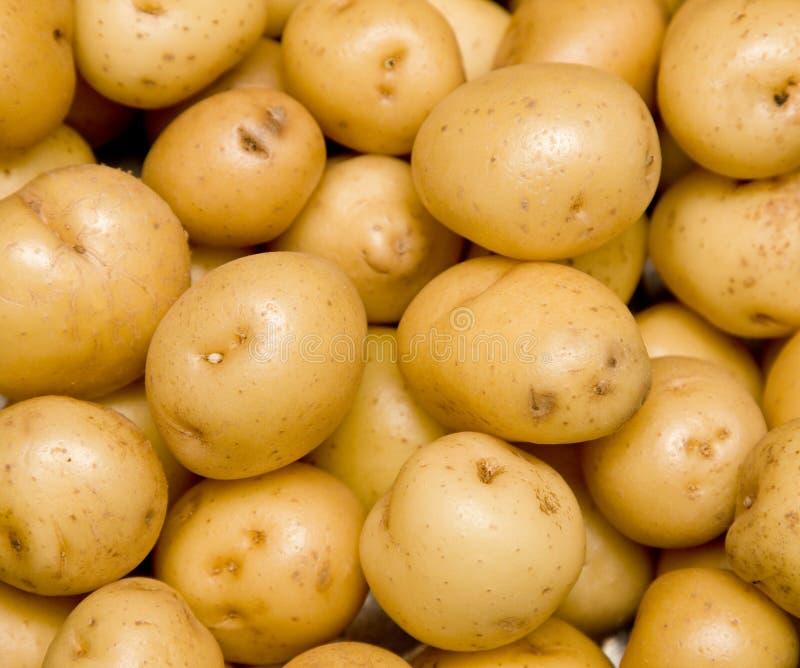 Nieuwe aardappels stock foto's