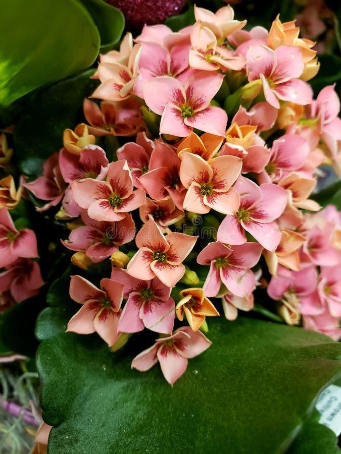Nieuwe de Lentebloemen stock fotografie