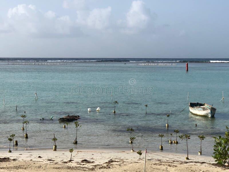 Nieuwe die mangrovebomen op een strand van de Dominicaanse Republiek met boot worden geplant royalty-vrije stock foto's