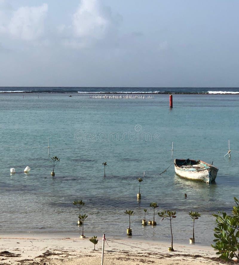 Nieuwe die mangrovebomen op een strand van de Dominicaanse Republiek met een boot worden geplant royalty-vrije stock foto's