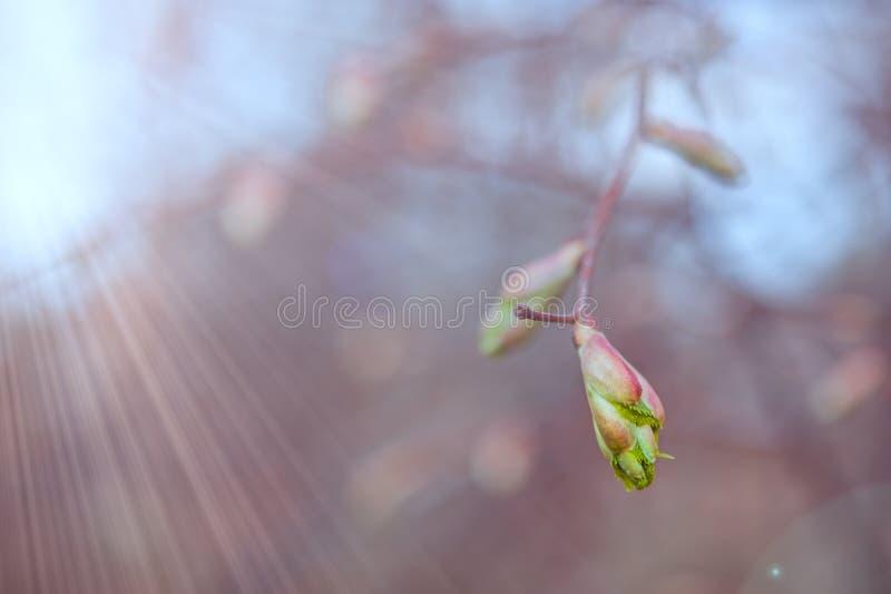 Nieuwe groene bladeren op de lentetak stock fotografie