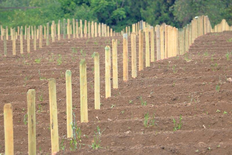 Nieuwe houten posten op een bosbessengebied stock foto