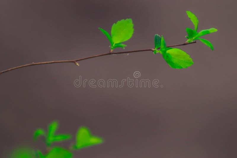 Nieuwe jonge bladeren op boom royalty-vrije stock afbeeldingen