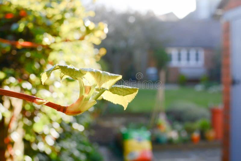 Nieuwe struiken en spruiten die in een tuin groeien stock fotografie