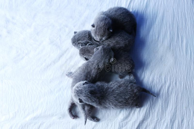 Nieuwe vijf - geboren katjes, weinig oude dagen, mening van hierboven royalty-vrije stock afbeeldingen