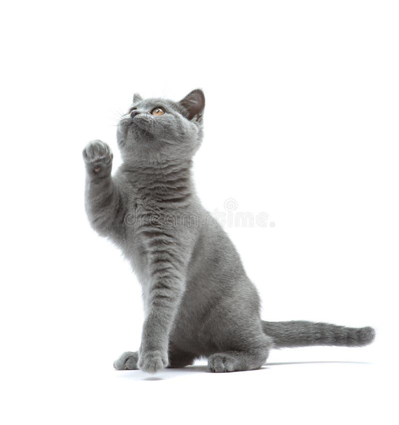 Nieuwsgierig katje stock fotografie