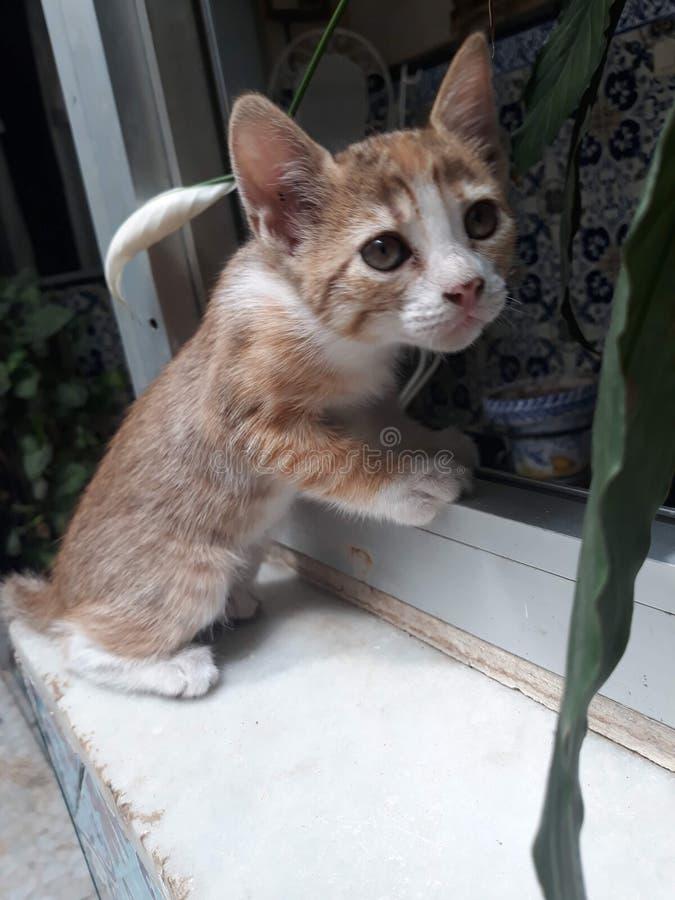 Nieuwsgierig katje die iets zoeken stock afbeelding