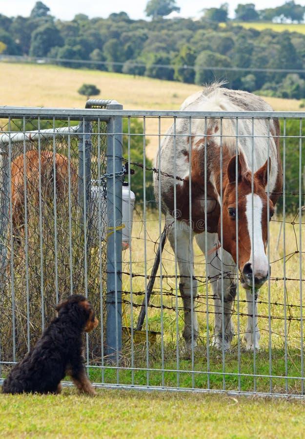 Nieuwsgierig paard die de naburige puppyhond controleren royalty-vrije stock foto's