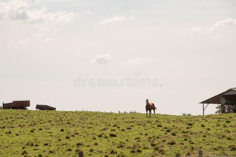 Nieuwsgierig Paard op Landbouwbedrijf stock foto's