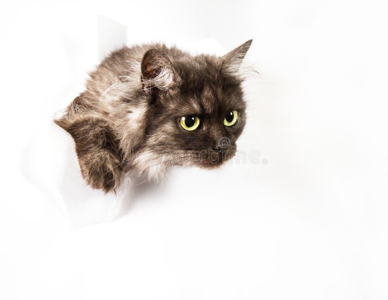 Download Nieuwsgierig weinig kat stock afbeelding. Afbeelding bestaande uit creatief - 54079977